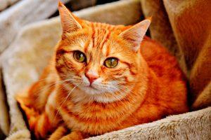 seguros animales domésticos