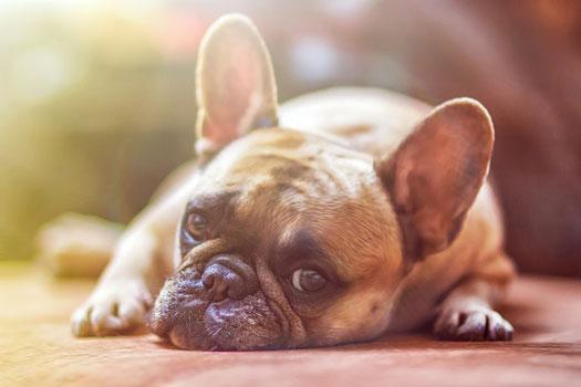 seguro para perros y coberturas