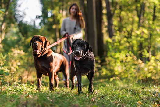 seguro obligatorio para perros