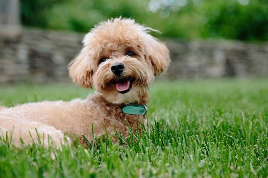 seguros para perros y mascotas - animales domésticos
