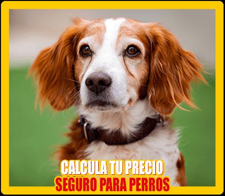 calcular seguros para perros baratos