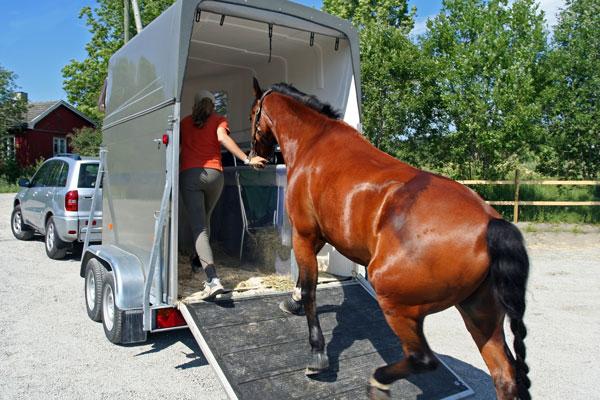 horse van trailer